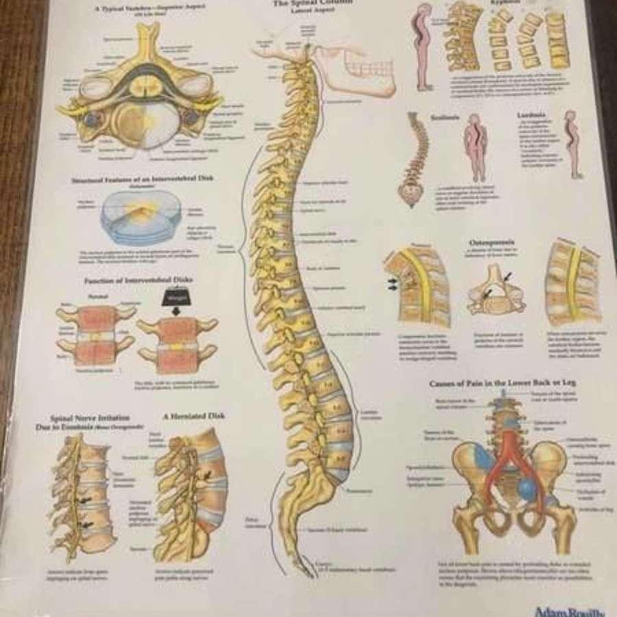 Set of 3 Anatomical Charts