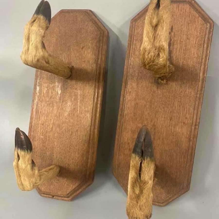 Pair Taxidermy Hoofs Gun Rack